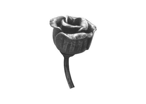50.103 Różyczka